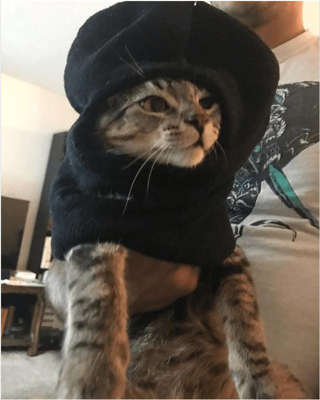 halloween Robber