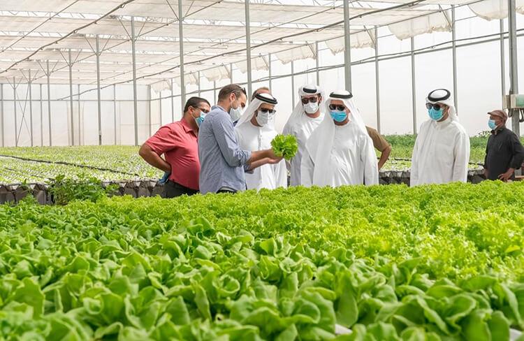 Greenhouse vegetable planting